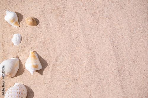 Fotografija Sea shell conch on sand beach at coast