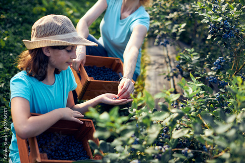 Obraz na płótnie Mother and daughter picking blueberries on a organic farm - family business concept