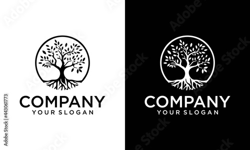 tree vector icon. Nature trees vector illustration logo design. green spring tree with female face and roots on white background, vector, Abstract Human tree logo. Unique Tree Vector illustration