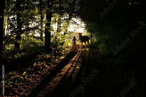 Fototapeta premium bajkowy las