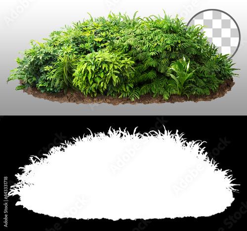 Fotografia Cut out bush