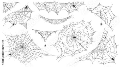 Fotografie, Obraz Spider web silhouette