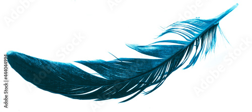 Fotografiet a blue feather on a white isolated background
