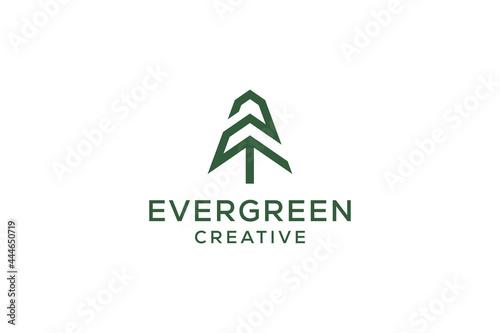 Photo Letter Z pine evergreen