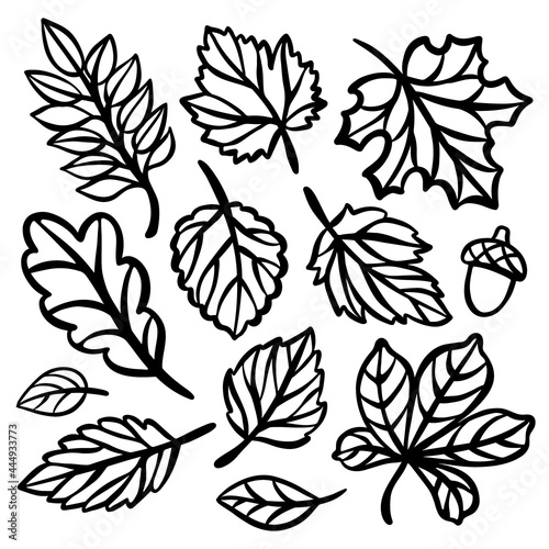 AUTUMN LINE LEAVES Monochrome Collection Of Plant Leaves Carved Openwork Contour Fotobehang