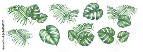 Watercolor elements of monstera. Tropical set garden flowers. Collection botanic illustration leaves, flower and branches.