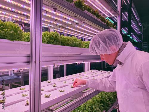 Fotografiet Vertical farm researcher takes care of vegetables growing on vertical farm