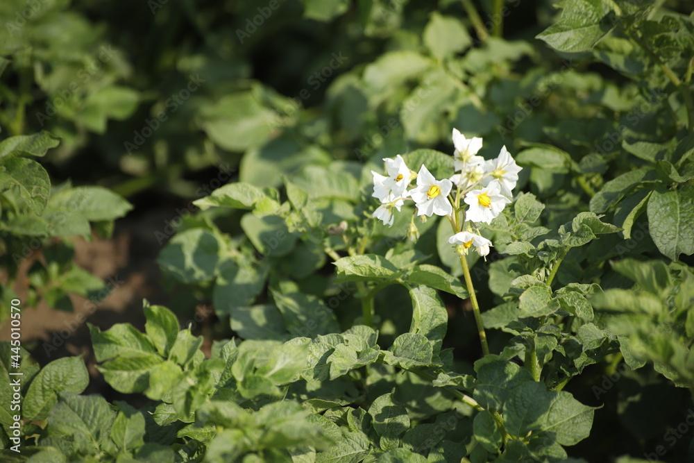 Kwiatek na łące