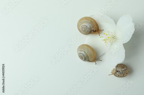 Billede på lærred Snails with shell and flower on white background