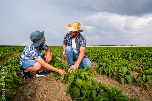 Fotografie, Obraz Father is teaching his son about cultivating chili