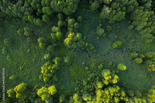 Wetlands in the summer forest. View from the drone.