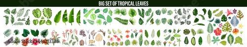 Fototapeta Tropical leaves collection