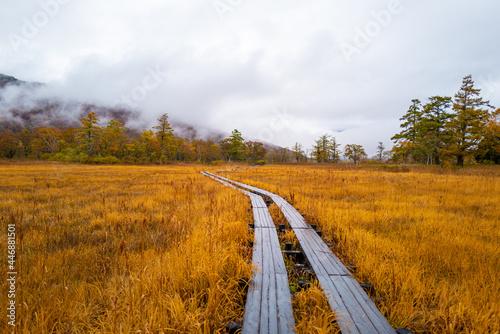 Fototapeta 尾瀬ヶ原湿原の紅葉の風景 燧ヶ岳 至仏山 Scenery of autumn leaves in Ozegahara marshland Mt