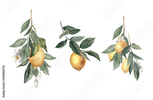 Leinwand Poster Watercolor hand drawn bouquets of lemons, citrus flowers and branches