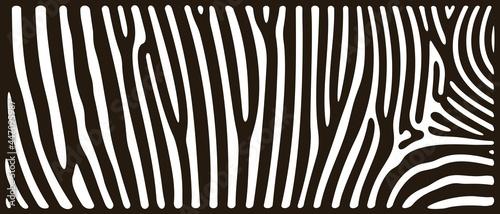 Fotografia Zebra texture logo. Isolated zebra texture on white background