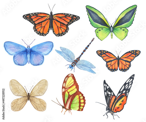 Canvas Print Set of watercolor butterflies and dragonfly isolated on white background