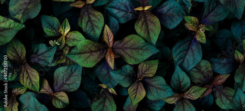 Valokuva tropical leaves, abstract green leaves texture, nature background