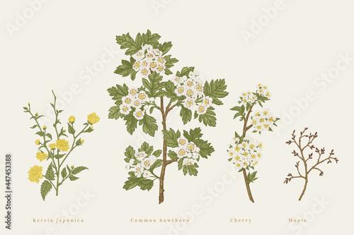 Fototapeta Set with branches of garden trees.