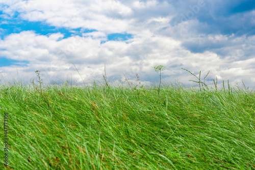 Green grass and blue sky with clouds.