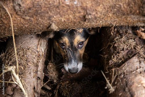 Slika na platnu Dziki bezdomny pies w norze