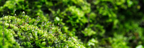 Wallpaper Mural close up beautiful bright Green moss grown up and Drop of water cover the rough stones and on the floor in the forest