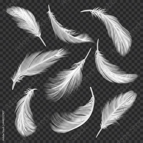 Stampa su Tela White feathers set