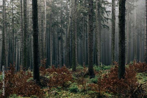 Fotografie, Obraz Landscape of a forest on a foggy gloomy day - perfect for wallpapers and backgro