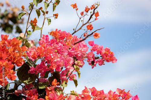 Fotografia ornamental plant flowers