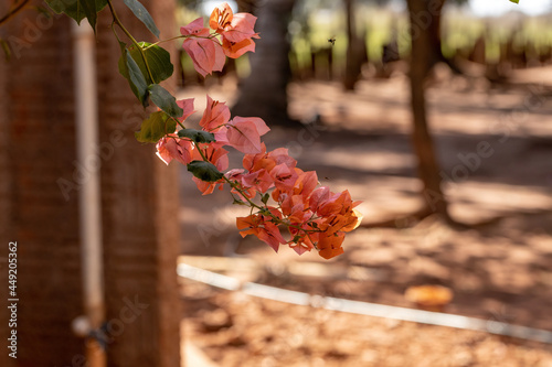 Canvastavla ornamental plant flowers