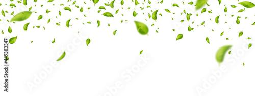 Foto Green leaves flying on white long banner