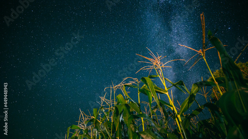Canvas Print Bottom View Of Night Starry Sky With Milky Way From Green Maize Corn Field Plantation In Summer Agricultural Season