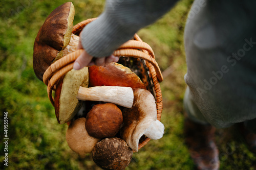 Fotografia Woman holds a basket of fresh mushrooms in the forest