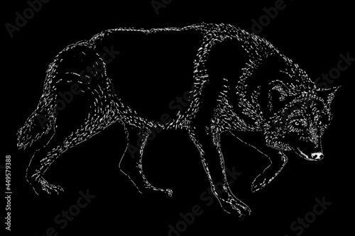Wallpaper Mural grey wolf scratch vector hand drawing illustration