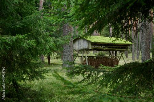 Jesienią w lesie, leśniczy przygotowują karmę dla dzikich zwierząt. Paśniki wypełnione są świeżym sianem.
