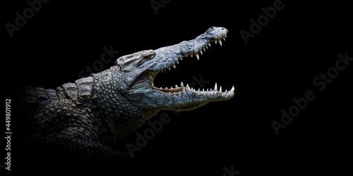 Murais de parede Close crocodile portrait on black background