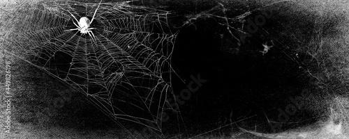 Fotografie, Obraz Spider in the cobweb on black grunge background