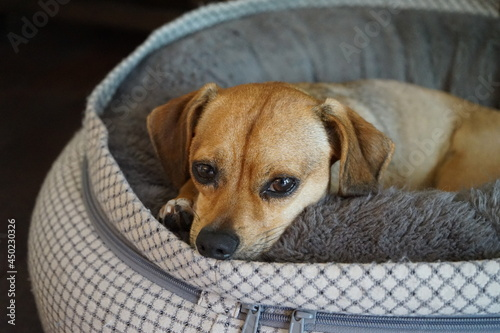 Close-up Portrait Of A Dog Fototapeta