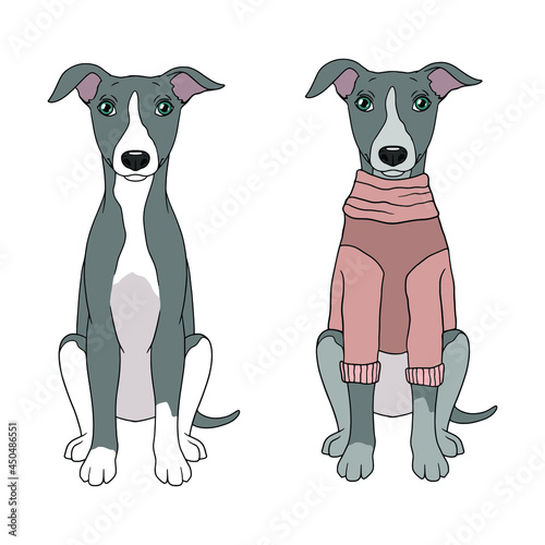 Fotografiet Illustration of a cute dog greyhound breed. Dog in clothes