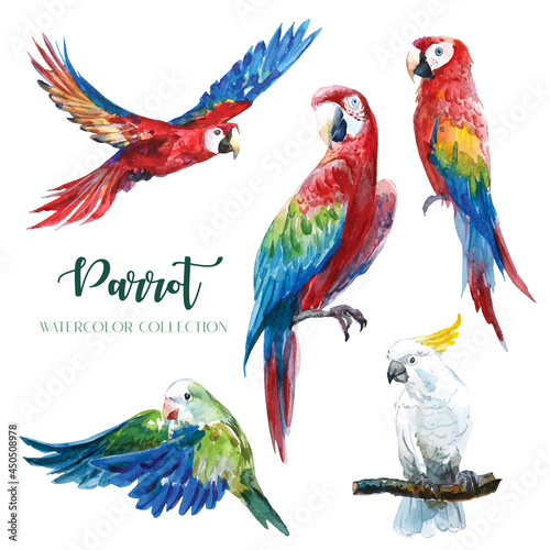 Foto Colorful parrot in various gestures watercolor collection.