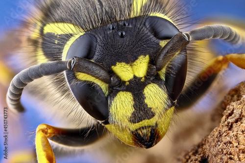 Vászonkép Super macro portrait of a wasp on a black background