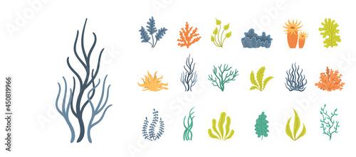 Valokuva Set of seaweeds, underwater sea plants, shells.