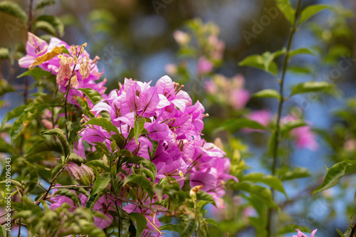 Tablou Canvas ornamental plant flowers