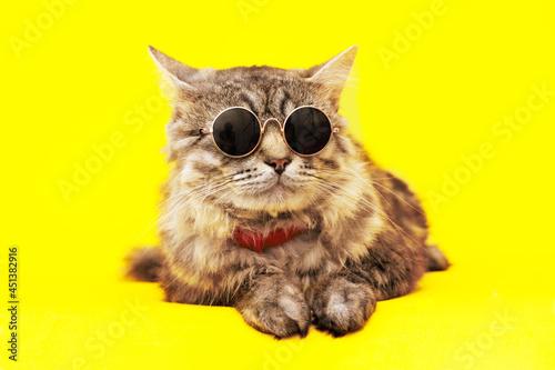 Fototapeta Lovely fluffy cat wearing fashion glasses