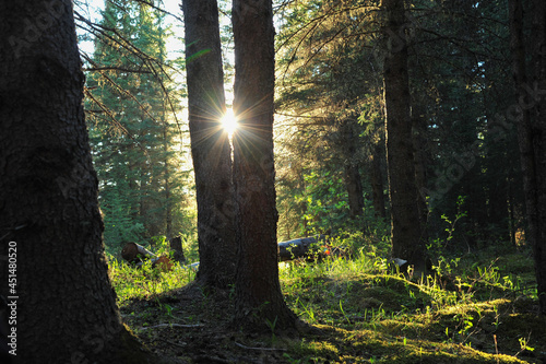sun rays appear through two trees in the forest Fototapeta