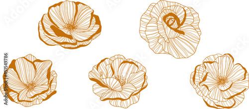 Obraz na płótnie Rose flowers isolated on white