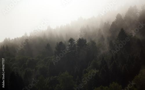 Fototapeta premium Krajobraz leśny wierzchołki drzew las we mgle panorama