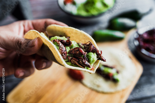 hand holding tacos de chapulines or grasshopper taco traditional in mexican food Fototapet