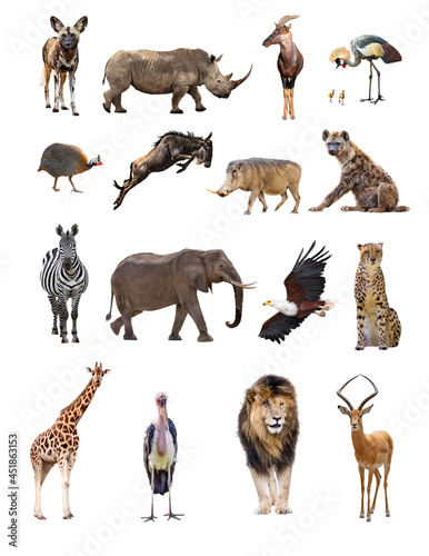 Obraz na płótnie Set of African Safari Animals Isolated on White