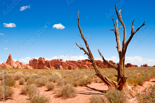 Landscape and dried out tree in arches national park, USA Fotobehang