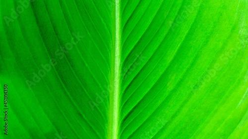 Naturalne tło szczegółu soczystych jasnych zielonych liści. Tekstura Tekstura niewyraźnych żyłek liści.